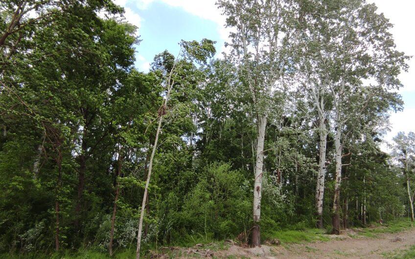 SATNICA – šuma i livada uz Karašicu, 3.897m2